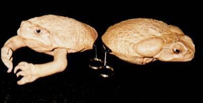 2 toad -Key rings